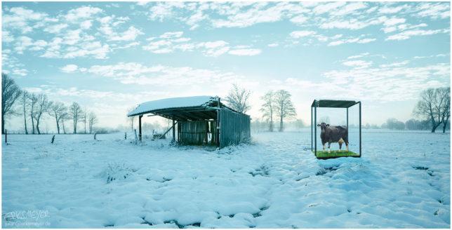 2017 Commercial Advertisement Composing Landscape Ad Photoshop Composite 3D Photography by Julian Erksmeyer Cow Snow